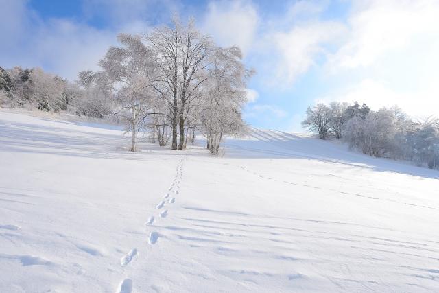 夢占い雪の上の足跡