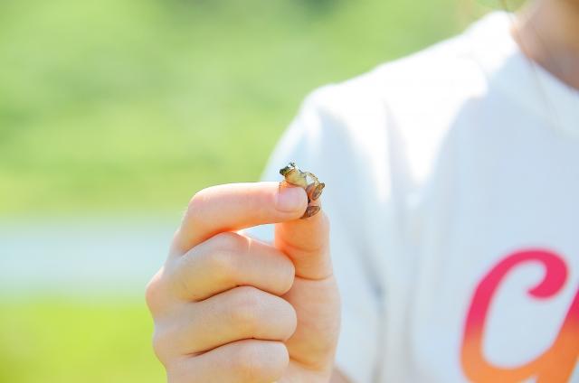 夢占い、カエルを捕まえる夢