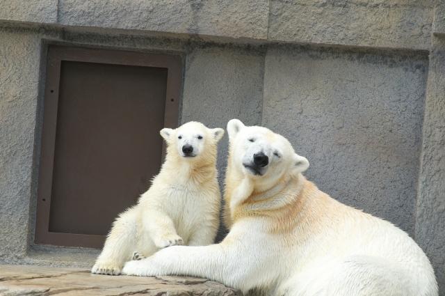 熊の親子の夢占い