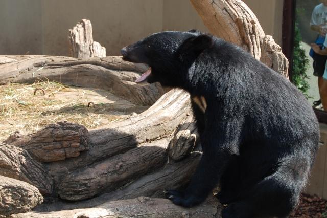 熊に襲われる夢占い