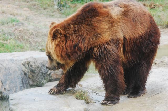 熊を殺す夢占い