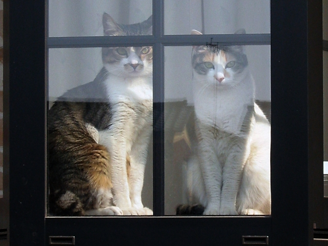 猫を飼う夢占い