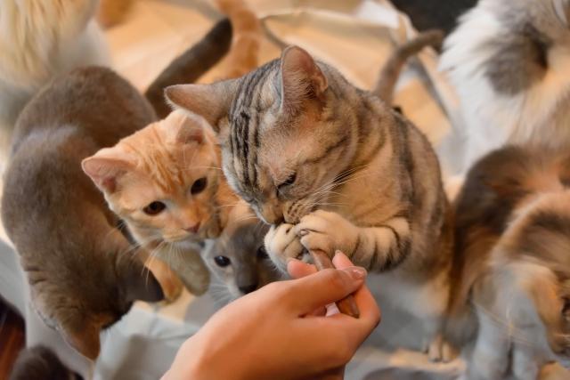 たくさんの猫が出てくる夢占い