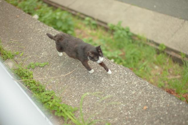 猫が逃げる夢占い