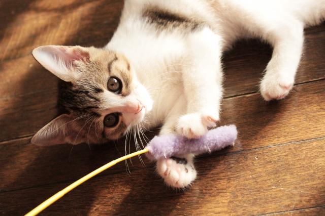 猫になつかれる夢占い