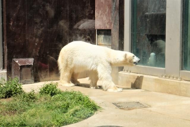 熊が家に入ってくる夢占い