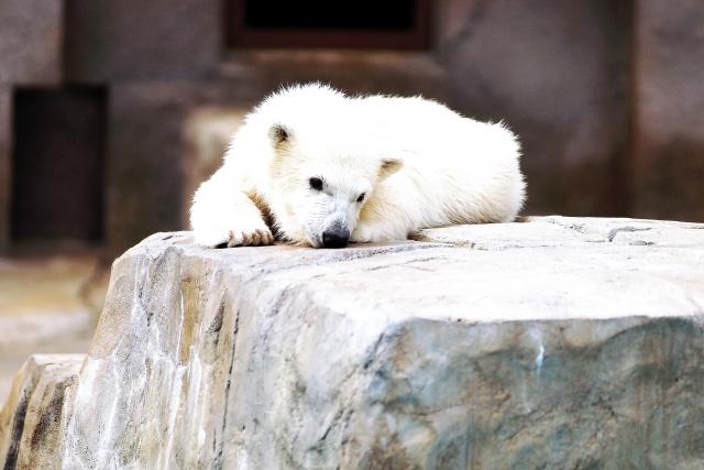小熊の夢占い