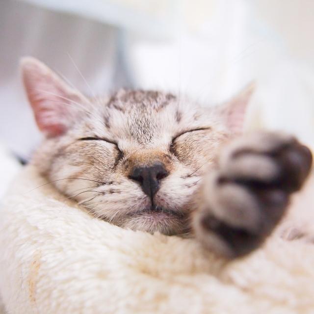 猫を抱っこする夢占い