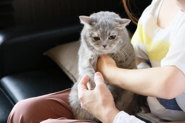 猫をつかまえる夢占い