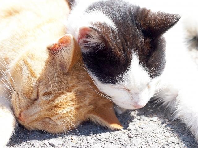猫の交尾の夢占い