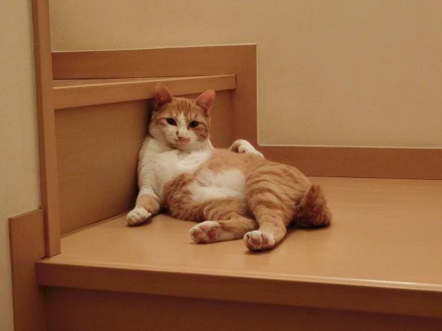 猫が家に入ってくる夢占い