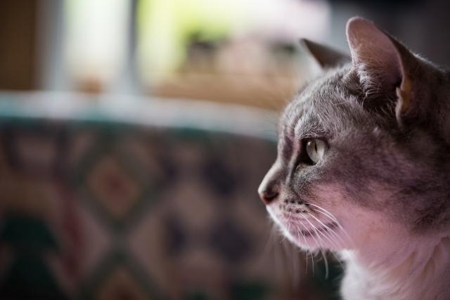 猫が生き返る夢占い