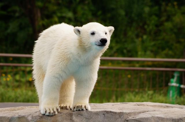 白熊の夢占い