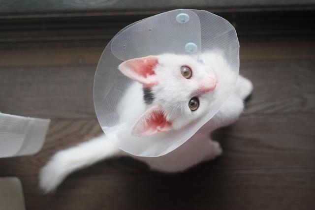 猫がケガをする夢占い