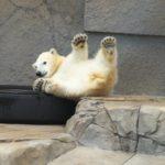 熊の夢占い