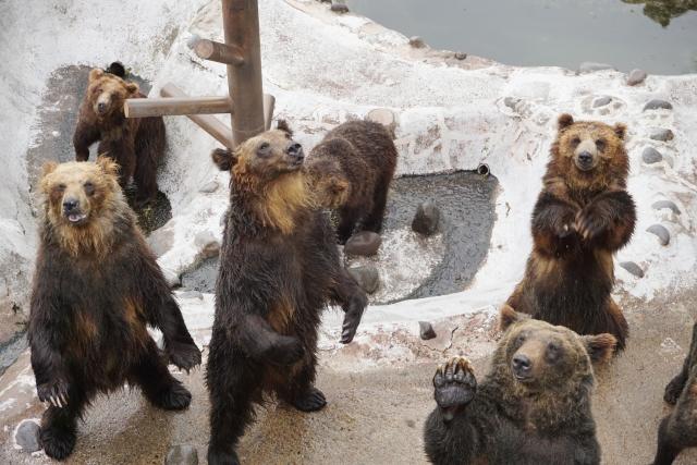 たくさんの熊が出てくる夢占い