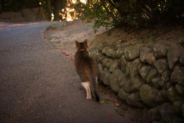 猫を追い払う夢占い