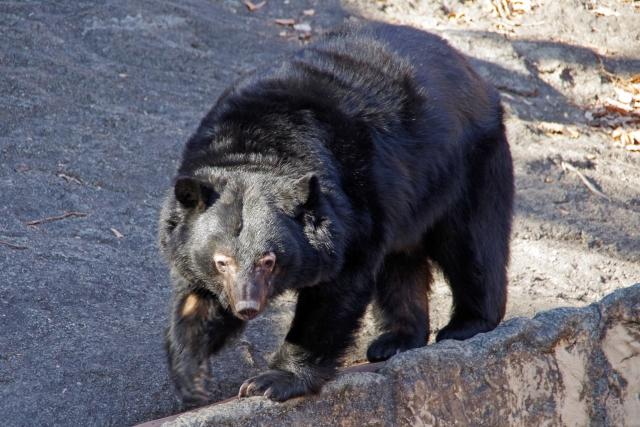 熊に追いかけられる夢占い