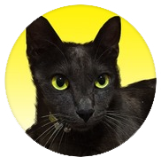 電話占いココナラ黒猫くぅー先生