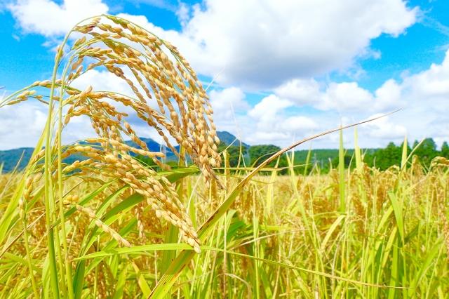米・麦の夢占い