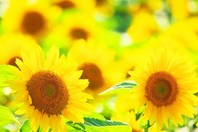 黄色が印象的な夢占い