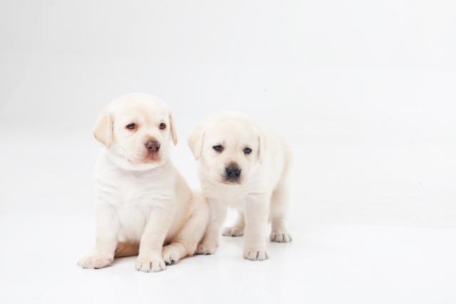 白い犬・その他の色の犬の夢占い