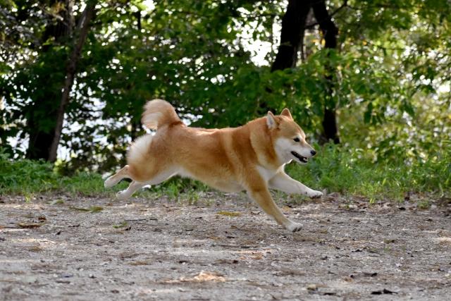 犬が逃げる夢占い