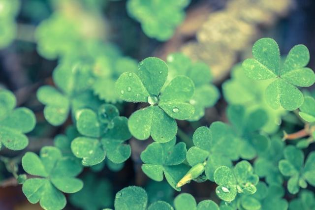 緑色が印象的な夢占い