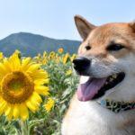 【夢占い】犬は『友情』や『忠誠心』のシンボル!対人関係を暗示していることが多い!