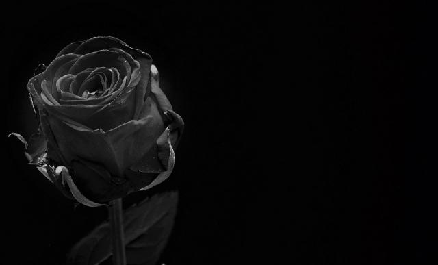 黒色が印象的な夢占い