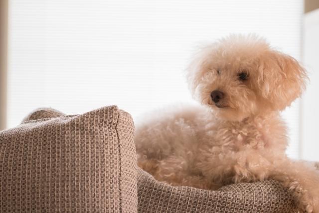 犬を飼う夢占い