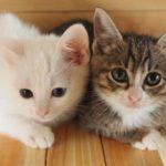 【夢占い】ペットは愛情の欠乏感の象徴!恋人や赤ちゃんができることを予知していることも!