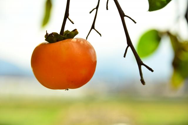 柿の夢占い