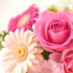 【夢占い】花は女性的エネルギーの象徴!種類や色によっても意味が変わる!