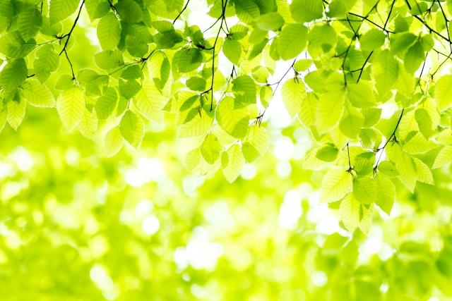 性質が『木』の人の金運が上がる財布の色