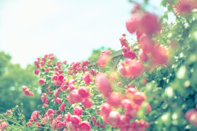 愛する・好きだと思う夢占い