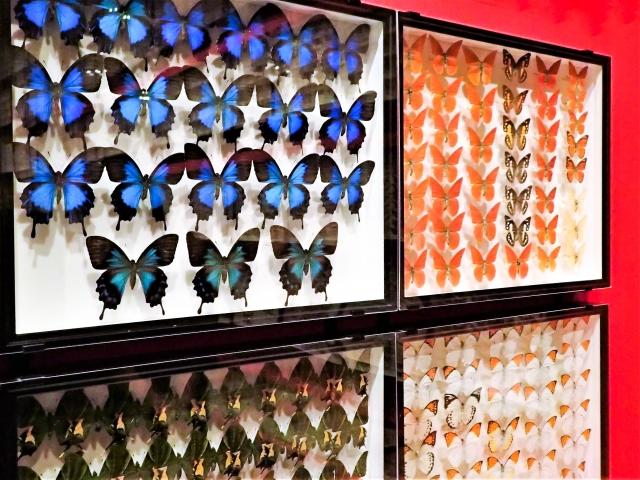 蝶が死ぬ・蝶を標本にしてしまう夢占い