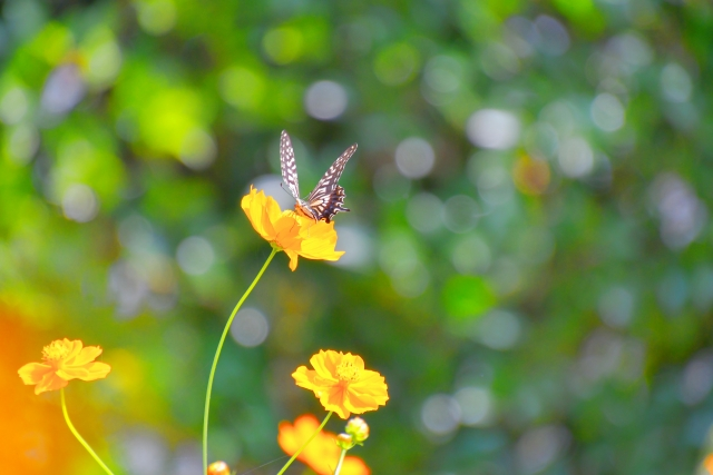 【夢占い】蝶は人生の転機や魂そのものを暗示!良くも悪くも変化の時が訪れる!