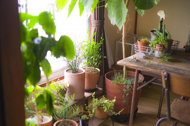 部屋中を観葉植物だらけにしない