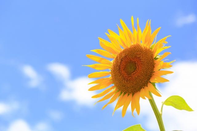大きな花は『金運アップ』