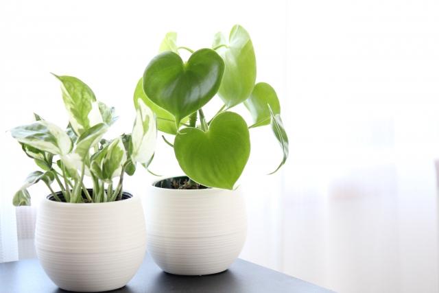 観葉植物が置かれている