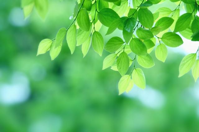 明るく健やかな状態にしてくれる『緑』