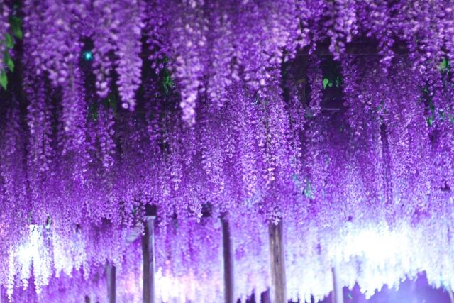 ワンランク上の状態を目指すなら『紫』