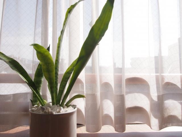 【オマケ】空気清浄の効果が高い観葉植物