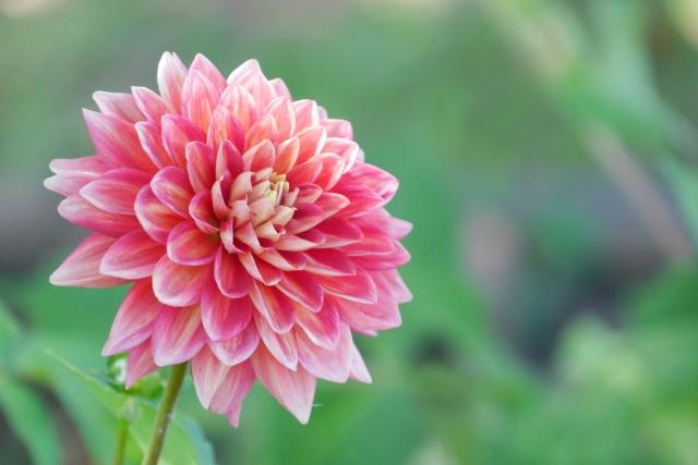 丸い印象の花は『結婚運アップ』『金運アップ』『仕事運アップ』