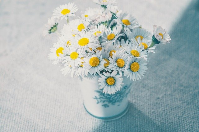 陶器に入った植物や花を飾る
