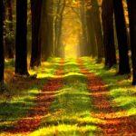 生きている世界を乗り換えて望みを引き寄せよう!並行世界の自分と統合するために。